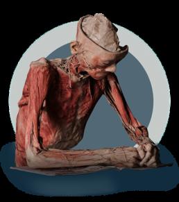 human_body_at_desk